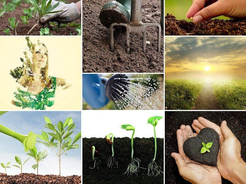 Kinesiology Farming Analogy