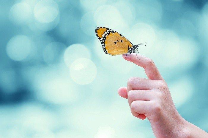 Butterfly brings me joy