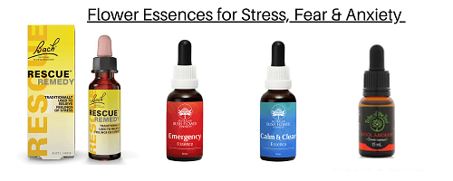 Flower Essences for Stress, Fear & Anxiety